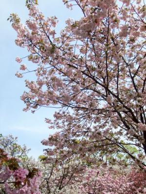 2011_0417ブログ0081