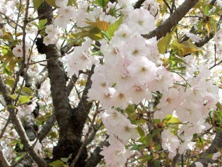 2011_0417ブログ0101