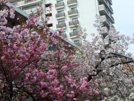 2011_0417ブログ0111