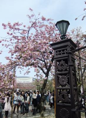 2011_0417ブログ0145