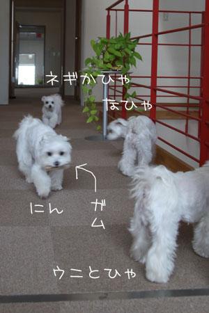09_10_4_4923.jpg
