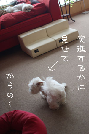 10_10_8878.jpg