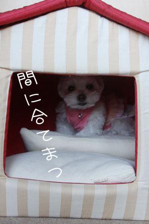 10_11_5498.jpg