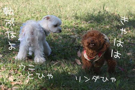 10_11_5593.jpg