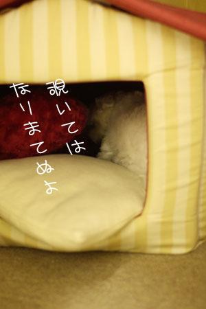 10_11_9002.jpg