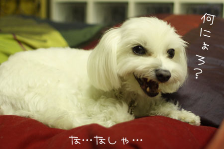 10_11_9019.jpg