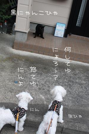 10_12_9086.jpg