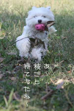 10_15_6154.jpg