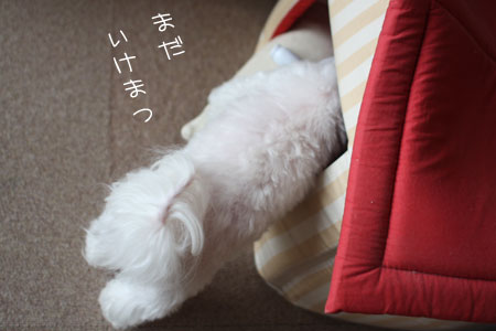 10_15_9451.jpg