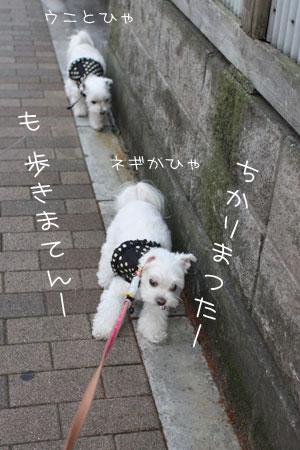 10_16_9727.jpg