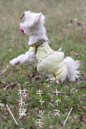 10_17_6407.jpg