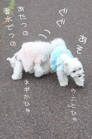 10_17_6509.jpg