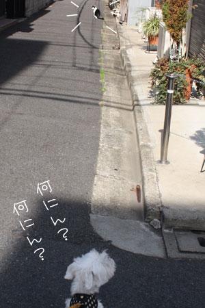 10_23_0972.jpg