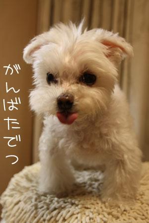 10_27_7769.jpg