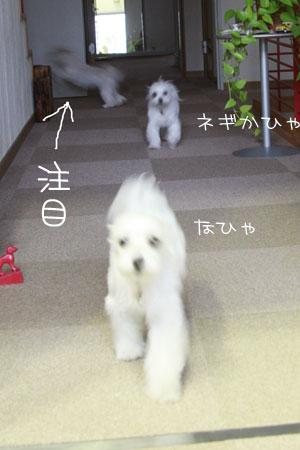 10_2_4658.jpg