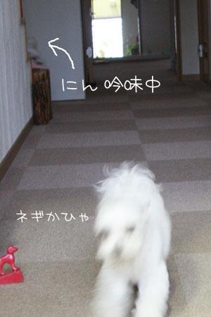10_2_4660.jpg