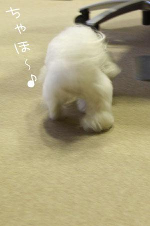10_2_4681.jpg