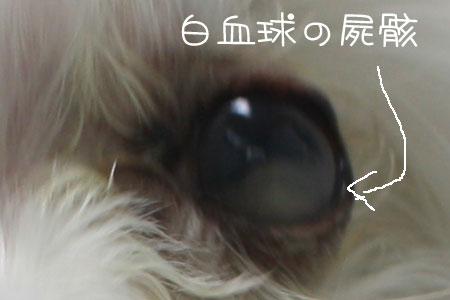 10_3_6179ab.jpg