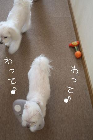 10_4_6411.jpg