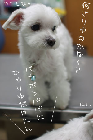 10_8_8668.jpg
