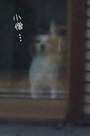 11_10_3774a.jpg