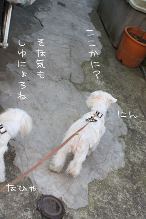 11_10_3821.jpg