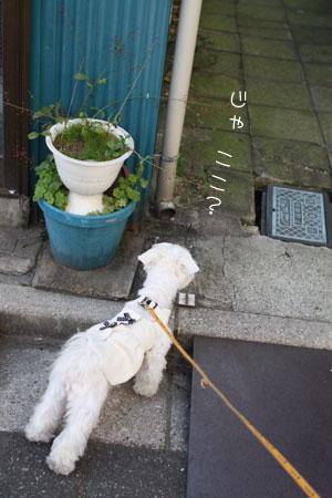 11_10_3846.jpg