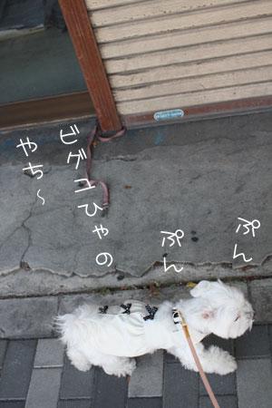 11_10_3871.jpg