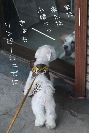 11_11_3928.jpg