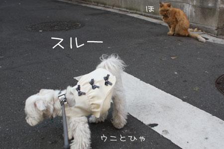 11_12_4244.jpg