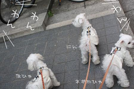 11_12_4271.jpg