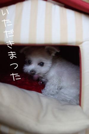 11_12_4352.jpg