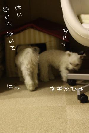 11_15_4442.jpg