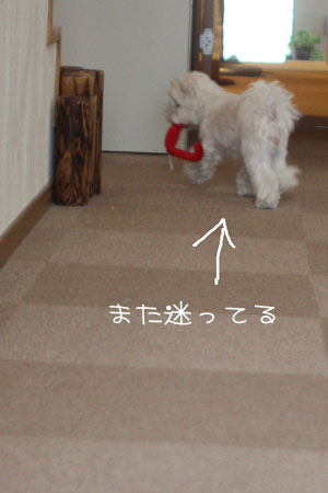 11_18_4666.jpg