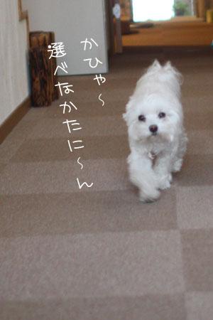 11_20_4818.jpg
