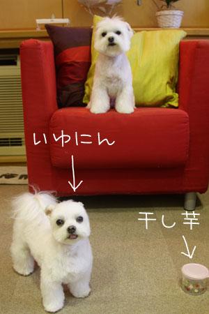 11_22_2706.jpg