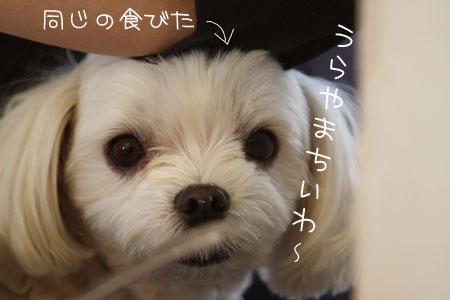 11_29_4040.jpg