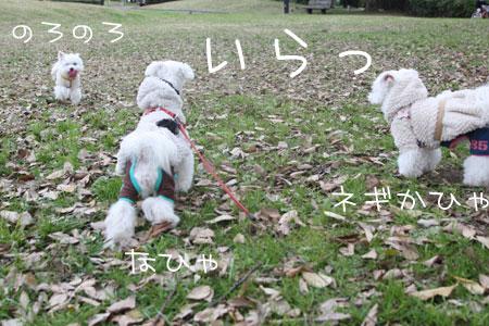 11_29_4207.jpg