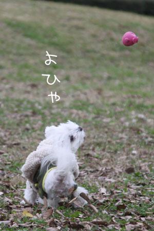 11_29_4270.jpg