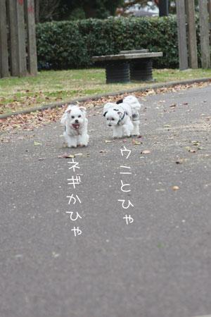 11_29_4320.jpg