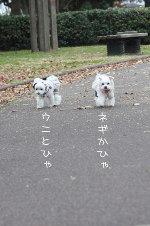 11_29_4322.jpg