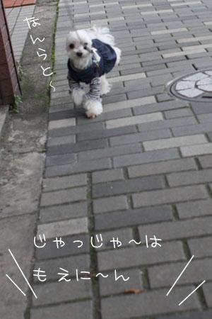 11_2_2468.jpg