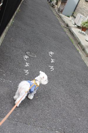 11_2_2481.jpg