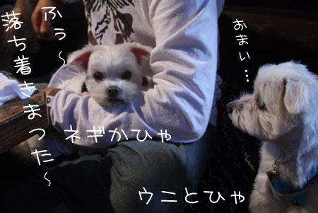 11_2_9516.jpg