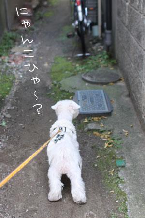 11_30_5780.jpg