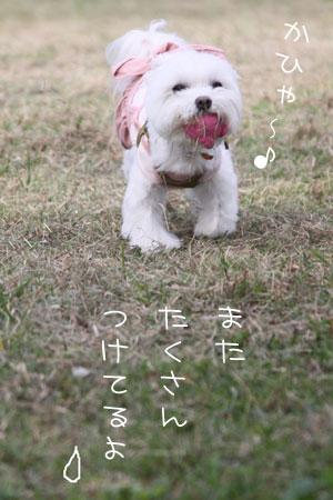 11_30_9151.jpg