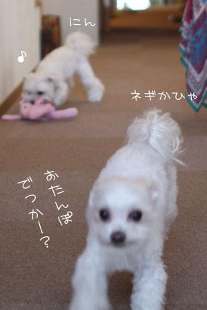 11_3_2591.jpg