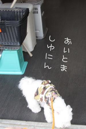 11_4_9771.jpg