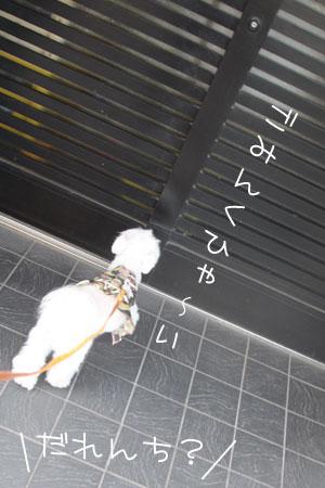 11_4_9777.jpg