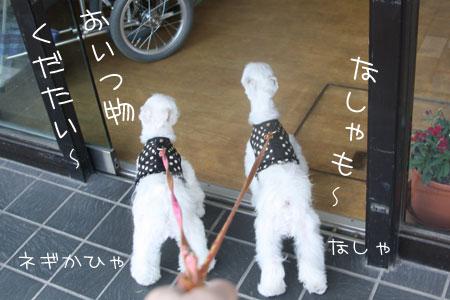 11_4_9790.jpg